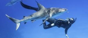 shark_banner-1140x500