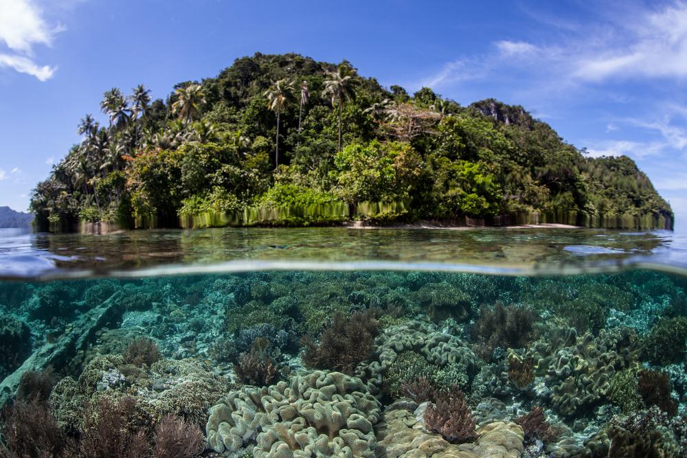 Raja-Ampat-Indonesia-Coral-Reef