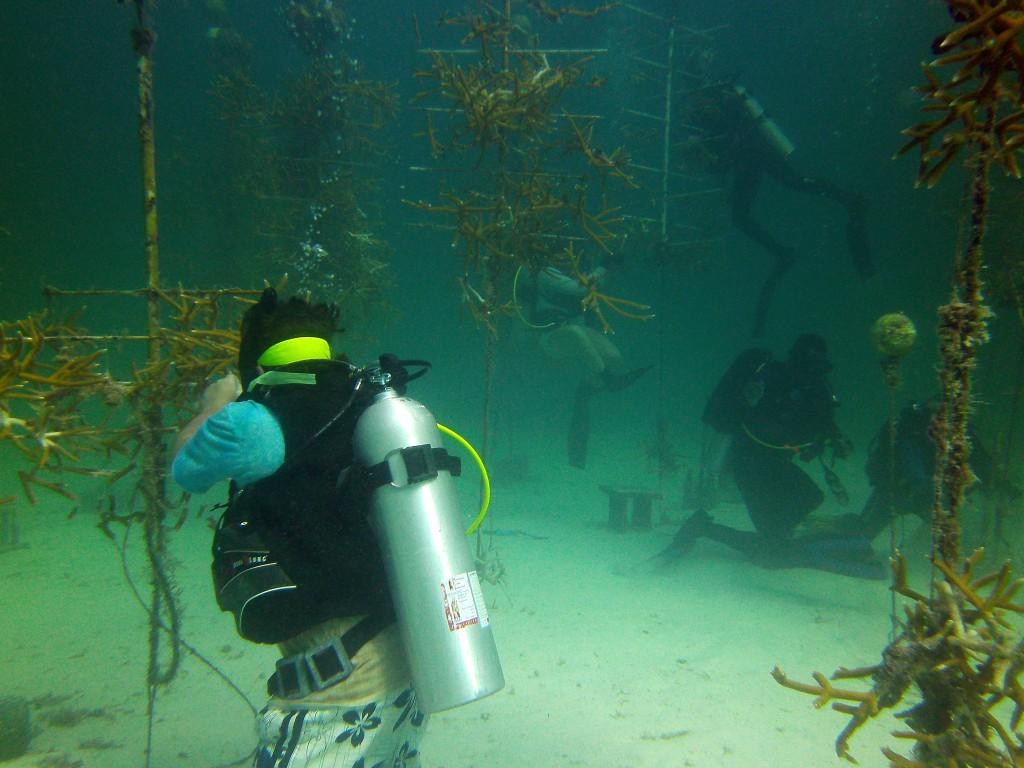 coral-nursary-restoratoin-florida-scuba-1024x768