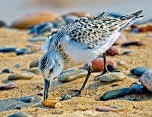 Bird_Butt