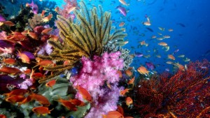 colorful_coral_reef_wallpaper_widescreen_2_nature-724x407